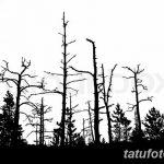 фото Эскизы тату ель от 23.04.2018 №035 - Sketches of a tattoo spruce - tatufoto.com