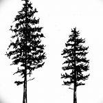 фото Эскизы тату ель от 23.04.2018 №042 - Sketches of a tattoo spruce - tatufoto.com