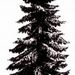 фото Эскизы тату ель от 23.04.2018 №044 - Sketches of a tattoo spruce - tatufoto.com
