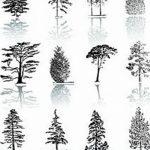 фото Эскизы тату ель от 23.04.2018 №046 - Sketches of a tattoo spruce - tatufoto.com