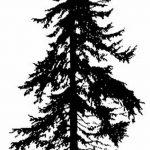 фото Эскизы тату ель от 23.04.2018 №050 - Sketches of a tattoo spruce - tatufoto.com