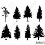 фото Эскизы тату ель от 23.04.2018 №055 - Sketches of a tattoo spruce - tatufoto.com 36345367
