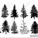 фото Эскизы тату ель от 23.04.2018 №055 - Sketches of a tattoo spruce - tatufoto.com 36345367 36345