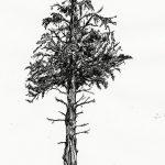 фото Эскизы тату ель от 23.04.2018 №058 - Sketches of a tattoo spruce - tatufoto.com