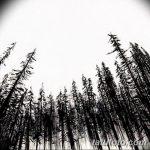 фото Эскизы тату ель от 23.04.2018 №061 - Sketches of a tattoo spruce - tatufoto.com
