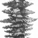 фото Эскизы тату ель от 23.04.2018 №067 - Sketches of a tattoo spruce - tatufoto.com