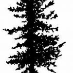 фото Эскизы тату ель от 23.04.2018 №069 - Sketches of a tattoo spruce - tatufoto.com