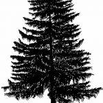 фото Эскизы тату ель от 23.04.2018 №079 - Sketches of a tattoo spruce - tatufoto.com