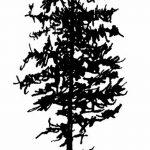 фото Эскизы тату ель от 23.04.2018 №082 - Sketches of a tattoo spruce - tatufoto.com