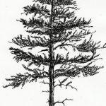 фото Эскизы тату ель от 23.04.2018 №090 - Sketches of a tattoo spruce - tatufoto.com