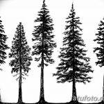 фото Эскизы тату ель от 23.04.2018 №095 - Sketches of a tattoo spruce - tatufoto.com