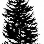 фото Эскизы тату ель от 23.04.2018 №096 - Sketches of a tattoo spruce - tatufoto.com