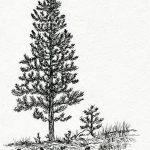 фото Эскизы тату ель от 23.04.2018 №100 - Sketches of a tattoo spruce - tatufoto.com