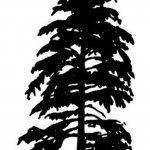 фото Эскизы тату ель от 23.04.2018 №101 - Sketches of a tattoo spruce - tatufoto.com