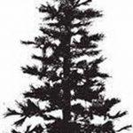 фото Эскизы тату ель от 23.04.2018 №111 - Sketches of a tattoo spruce - tatufoto.com
