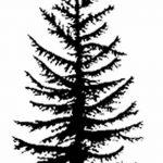 фото Эскизы тату ель от 23.04.2018 №114 - Sketches of a tattoo spruce - tatufoto.com