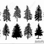 фото Эскизы тату ель от 23.04.2018 №119 - Sketches of a tattoo spruce - tatufoto.com