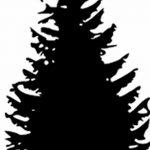 фото Эскизы тату ель от 23.04.2018 №122 - Sketches of a tattoo spruce - tatufoto.com