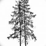 фото Эскизы тату ель от 23.04.2018 №125 - Sketches of a tattoo spruce - tatufoto.com
