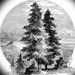 фото Эскизы тату ель от 23.04.2018 №127 - Sketches of a tattoo spruce - tatufoto.com