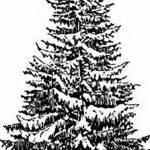 фото Эскизы тату ель от 23.04.2018 №129 - Sketches of a tattoo spruce - tatufoto.com