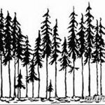 фото Эскизы тату ель от 23.04.2018 №131 - Sketches of a tattoo spruce - tatufoto.com