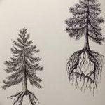 фото Эскизы тату ель от 23.04.2018 №132 - Sketches of a tattoo spruce - tatufoto.com