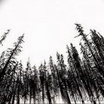 фото Эскизы тату ель от 23.04.2018 №133 - Sketches of a tattoo spruce - tatufoto.com