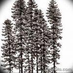 фото Эскизы тату ель от 23.04.2018 №151 - Sketches of a tattoo spruce - tatufoto.com