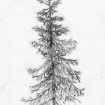фото Эскизы тату ель от 23.04.2018 №160 - Sketches of a tattoo spruce - tatufoto.com