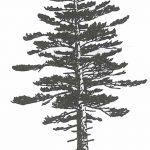 фото Эскизы тату ель от 23.04.2018 №165 - Sketches of a tattoo spruce - tatufoto.com