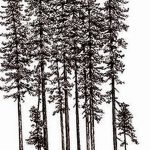 фото Эскизы тату ель от 23.04.2018 №166 - Sketches of a tattoo spruce - tatufoto.com