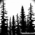фото Эскизы тату ель от 23.04.2018 №167 - Sketches of a tattoo spruce - tatufoto.com 25623424 346345