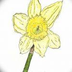 фото Эскизы тату нарцисс от 18.04.2018 №001 - Sketches of daffodil - tatufoto.com