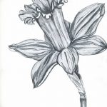 фото Эскизы тату нарцисс от 18.04.2018 №003 - Sketches of daffodil - tatufoto.com