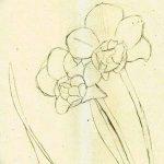 фото Эскизы тату нарцисс от 18.04.2018 №007 - Sketches of daffodil - tatufoto.com
