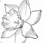 фото Эскизы тату нарцисс от 18.04.2018 №011 - Sketches of daffodil - tatufoto.com