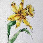 фото Эскизы тату нарцисс от 18.04.2018 №012 - Sketches of daffodil - tatufoto.com