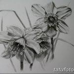 фото Эскизы тату нарцисс от 18.04.2018 №021 - Sketches of daffodil - tatufoto.com