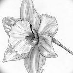 фото Эскизы тату нарцисс от 18.04.2018 №022 - Sketches of daffodil - tatufoto.com