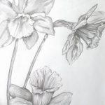 фото Эскизы тату нарцисс от 18.04.2018 №024 - Sketches of daffodil - tatufoto.com