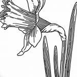 фото Эскизы тату нарцисс от 18.04.2018 №025 - Sketches of daffodil - tatufoto.com