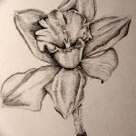фото Эскизы тату нарцисс от 18.04.2018 №033 - Sketches of daffodil - tatufoto.com