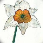фото Эскизы тату нарцисс от 18.04.2018 №038 - Sketches of daffodil - tatufoto.com