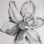 фото Эскизы тату нарцисс от 18.04.2018 №047 - Sketches of daffodil - tatufoto.com