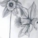 фото Эскизы тату нарцисс от 18.04.2018 №049 - Sketches of daffodil - tatufoto.com