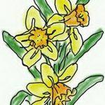 фото Эскизы тату нарцисс от 18.04.2018 №063 - Sketches of daffodil - tatufoto.com
