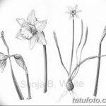 фото Эскизы тату нарцисс от 18.04.2018 №066 - Sketches of daffodil - tatufoto.com