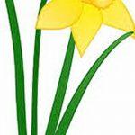 фото Эскизы тату нарцисс от 18.04.2018 №067 - Sketches of daffodil - tatufoto.com