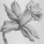 фото Эскизы тату нарцисс от 18.04.2018 №083 - Sketches of daffodil - tatufoto.com 347345354 36345